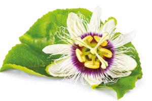 Rimedi Naturali Donna: Passiflora, utile contro l'attacco d'ansia e favorisce il benessere mentale