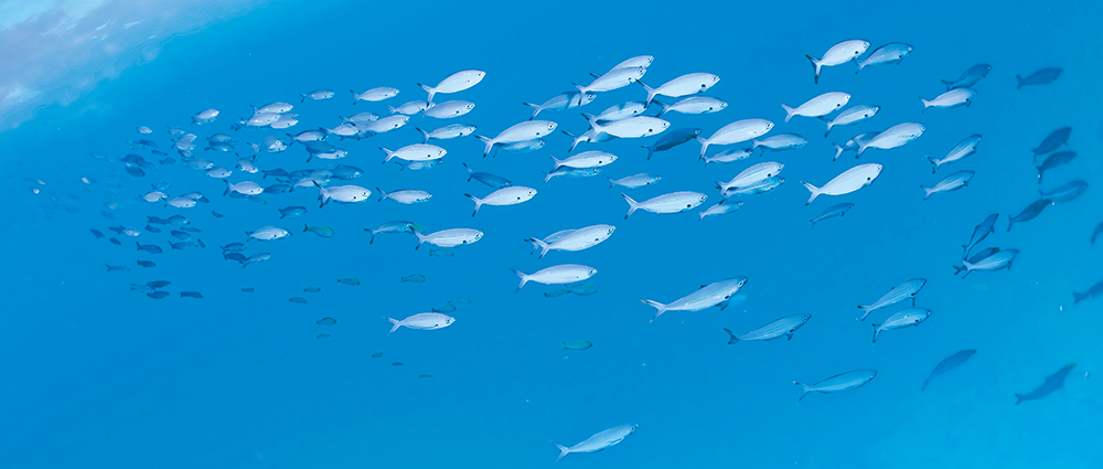 sardine-benefici-phyto-garda